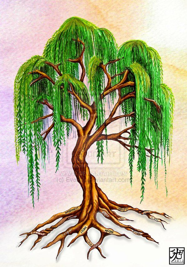 Amazing Weeping Willow Tree Design Ideas And Meaning My Willow Tree